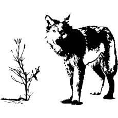 Wandtattoo Tiere Wolf Raubtier