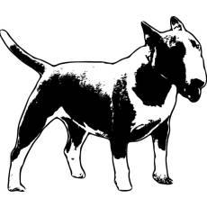 Wandtattoo Bullterrier
